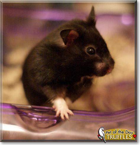 Foto-Foto Hamster Yang Paling Lucu Dan Menggemaskan «