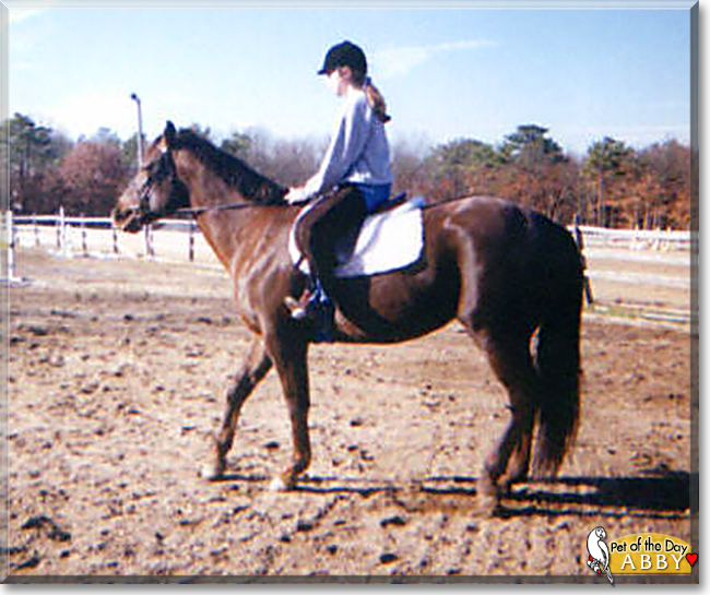 Abby the Quarter Horse, the Pet of the Day